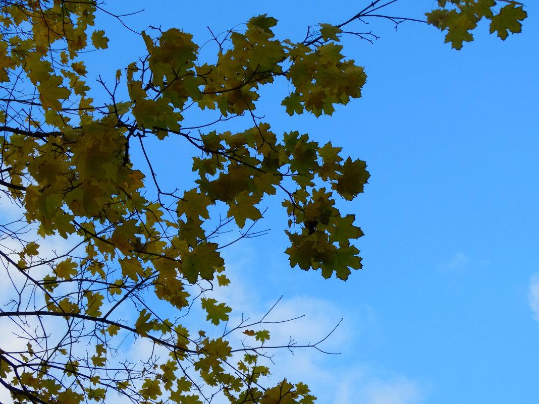 Природа рисует осень... - Тамара (st.tamara)