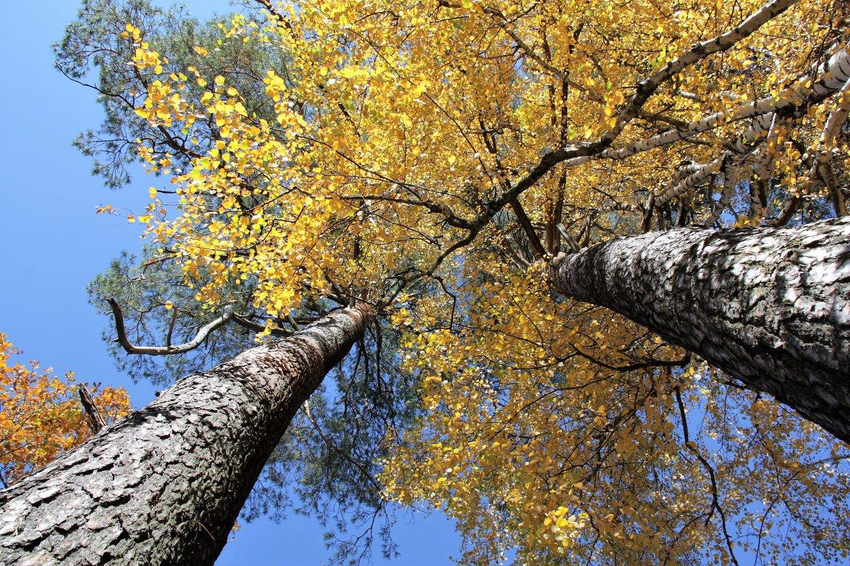 Осень - Владимир Холодницкий