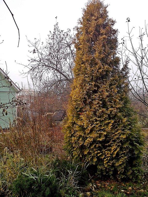 Зиму   ждала  и ждёт природа! - Виталий Селиванов