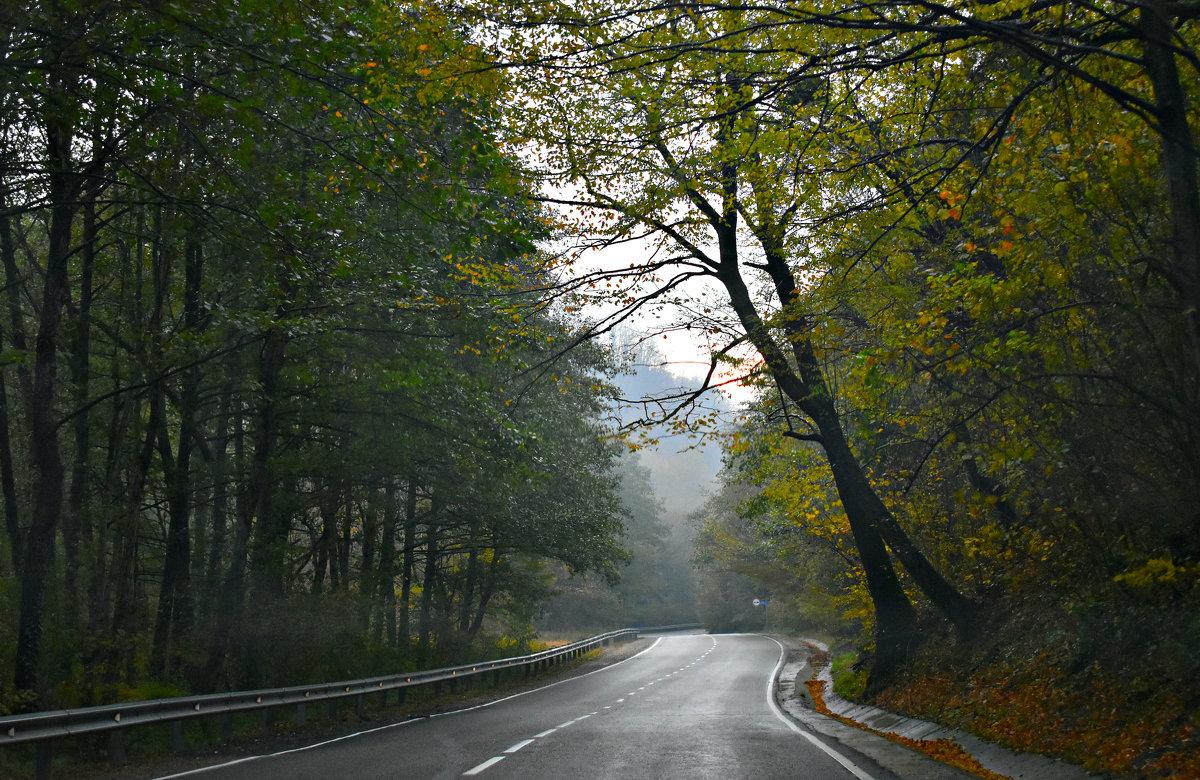 Дорога. Осень. Утро. - ...Настя ...