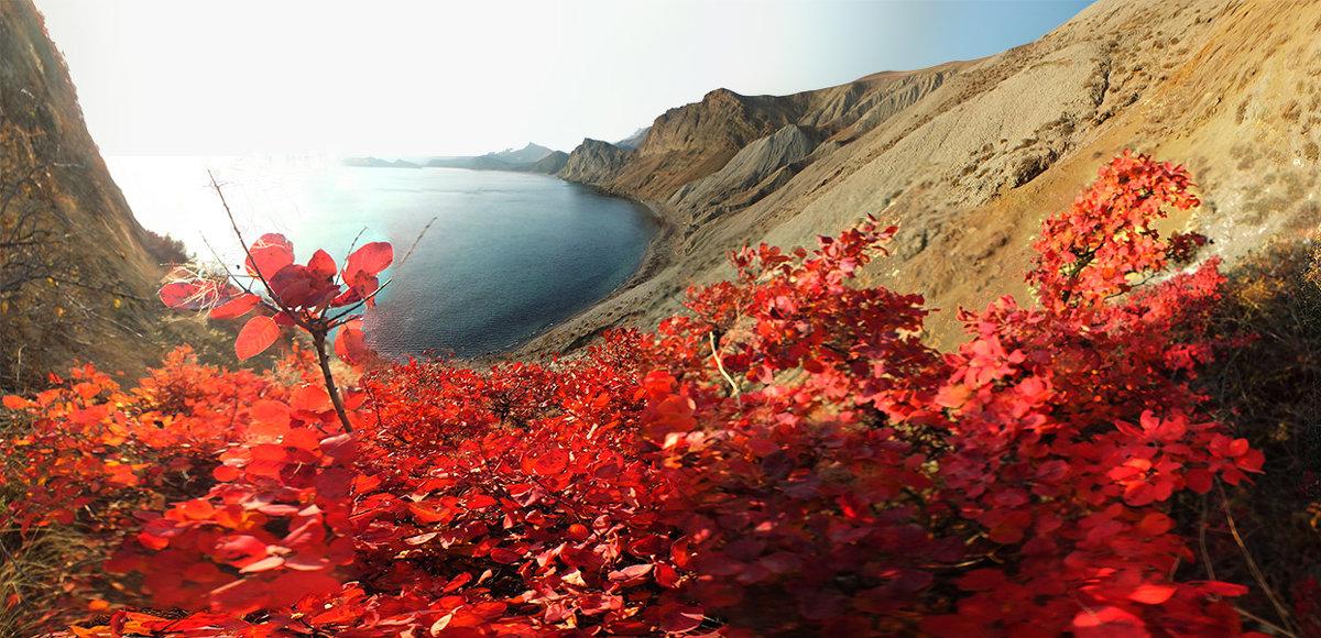 Алеют скумпии листы в закатном солнце Киммерии - viton