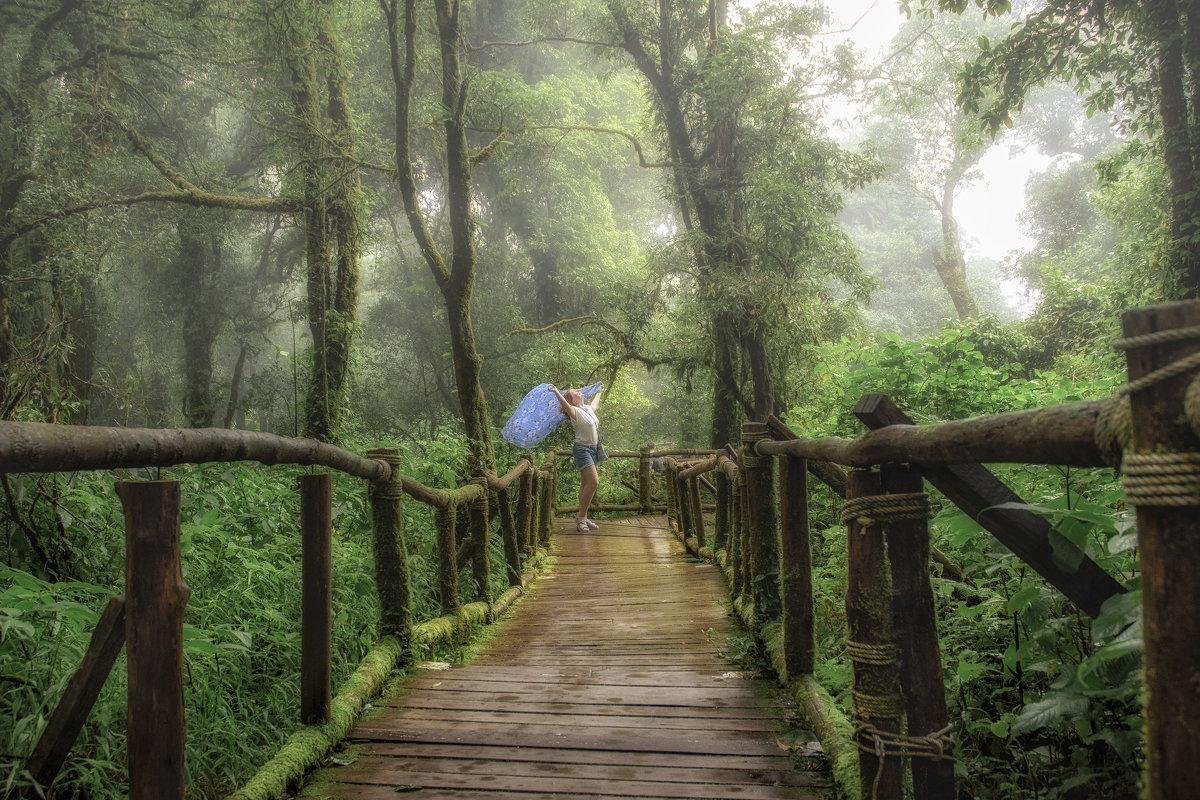 Волшебный лес - Андрей Ковалев