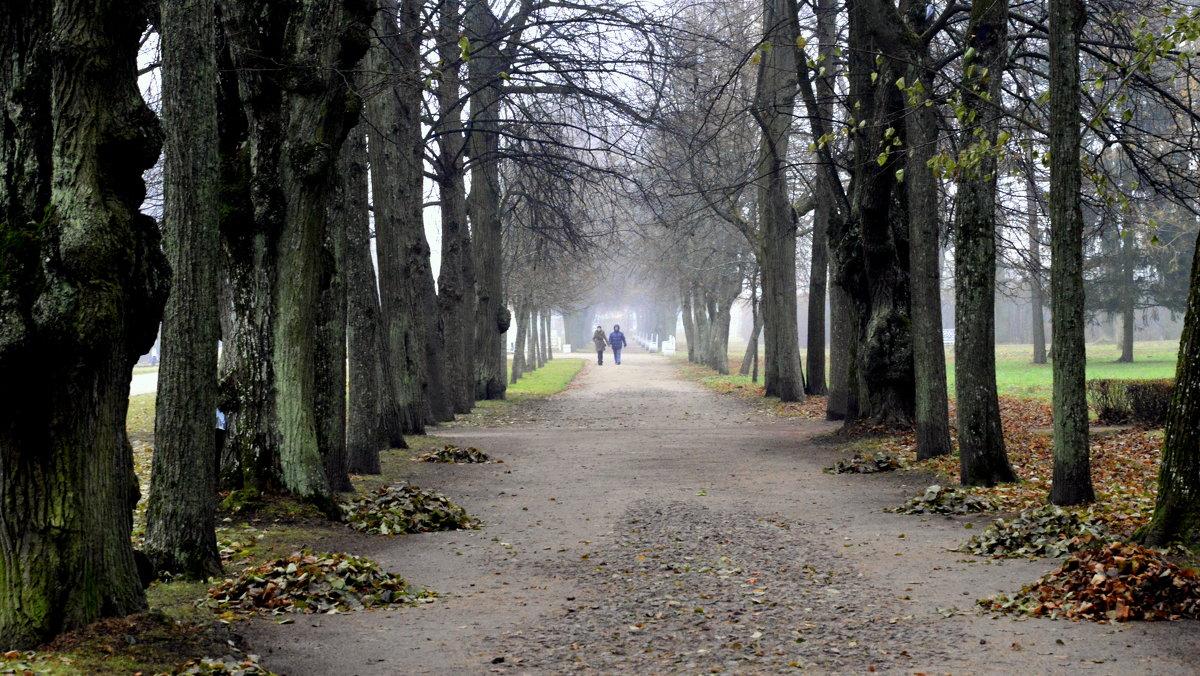Старая липовая аллея парка - Сергей