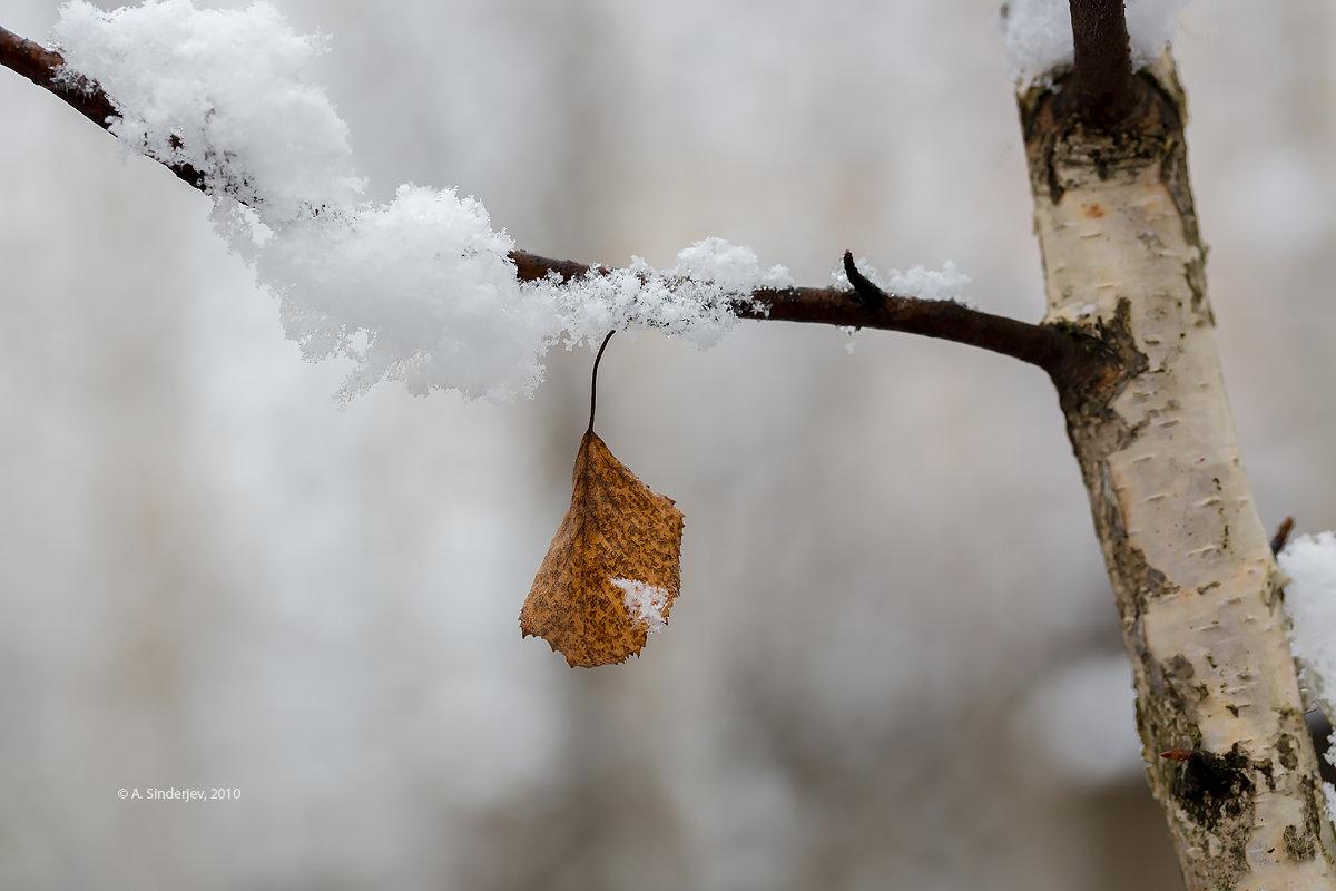 Одинокий лист - Александр Синдерёв