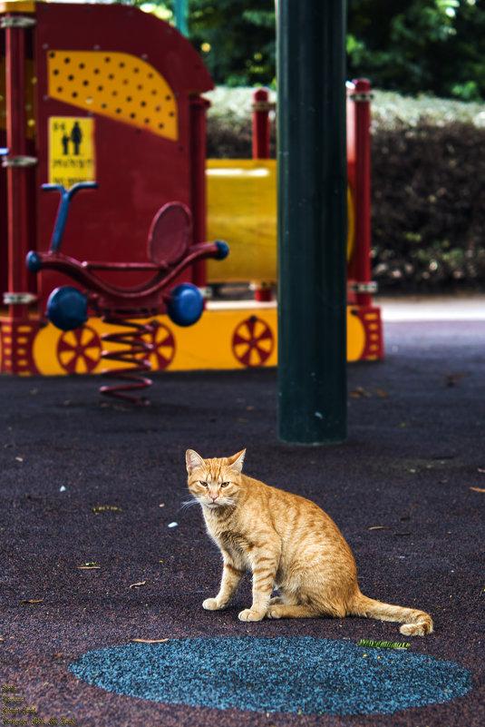 Кот который гуляет сам по себе ..... - Aleks Ben Israel