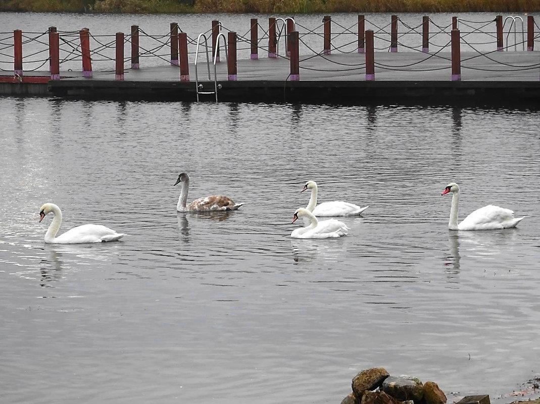Лебеди на Голубых озерах - Маргарита Батырева