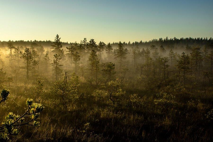 Туман, природа просыпается. - Anna Klaos
