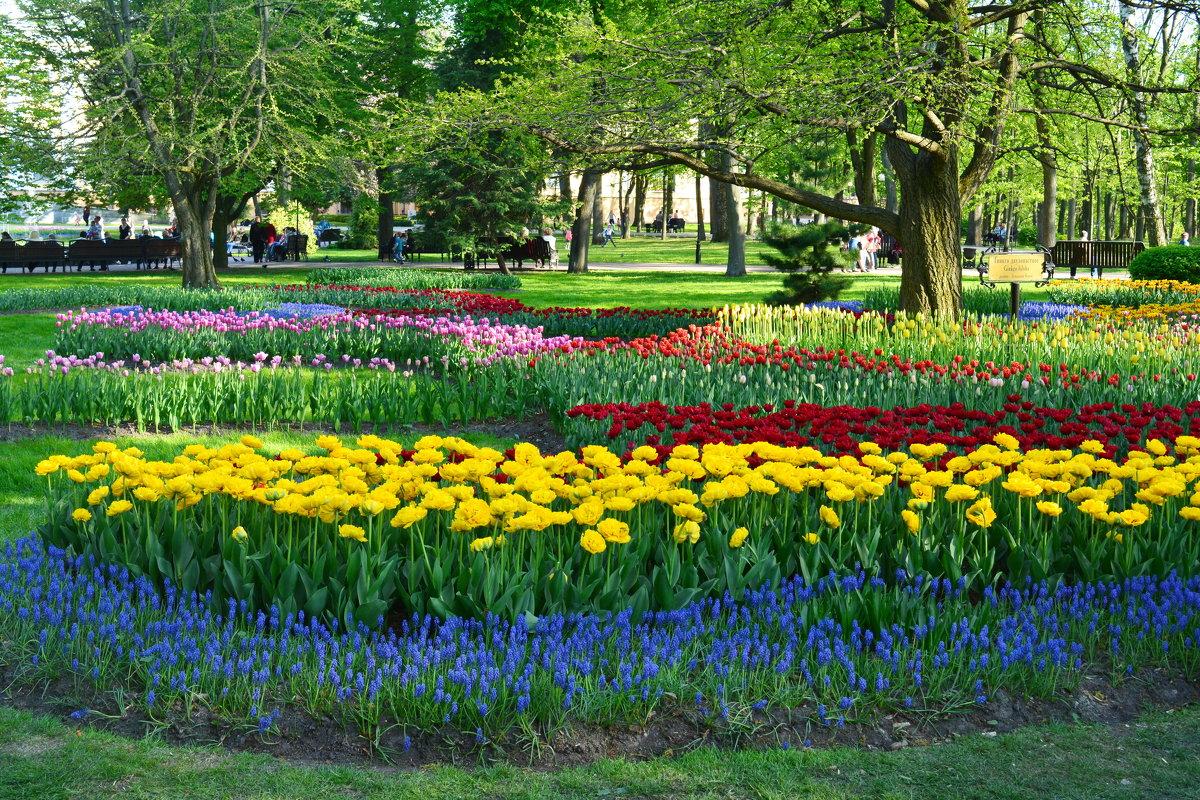 Весна в Гомельском парке - Юлия Кузнецова