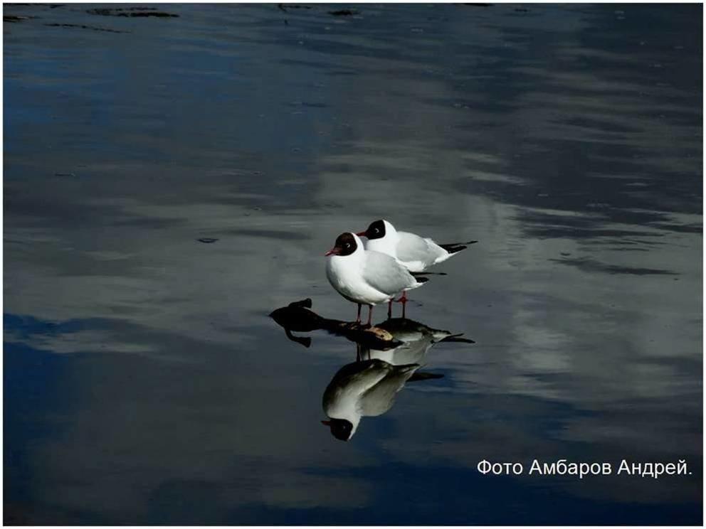 Чайки на дамбе - Андрей
