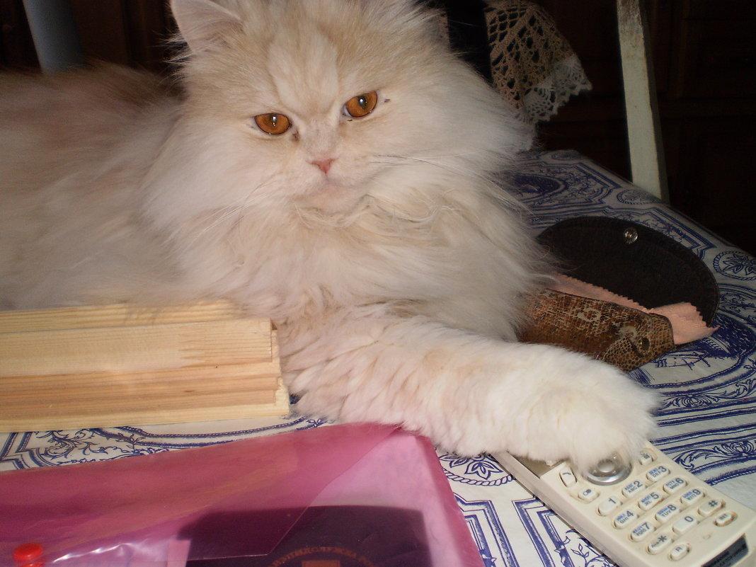 Кот и телефон. - венера чуйкова