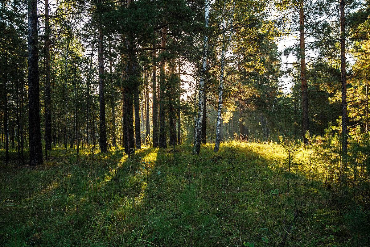 В сентябрьском лесу - Андрей Поляков
