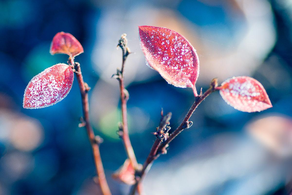 Ноябрьские краски - Lika Shakhmatova