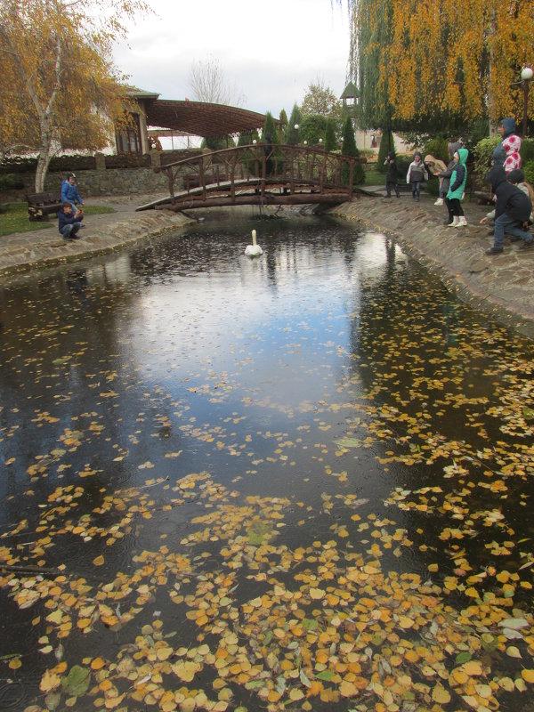 Осенний пруд - Dana