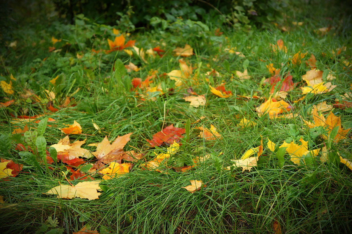 и падали листья... - Татьяна Б.