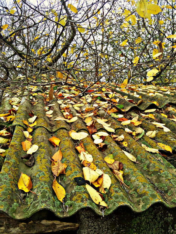 Осень - Татьяна Королёва