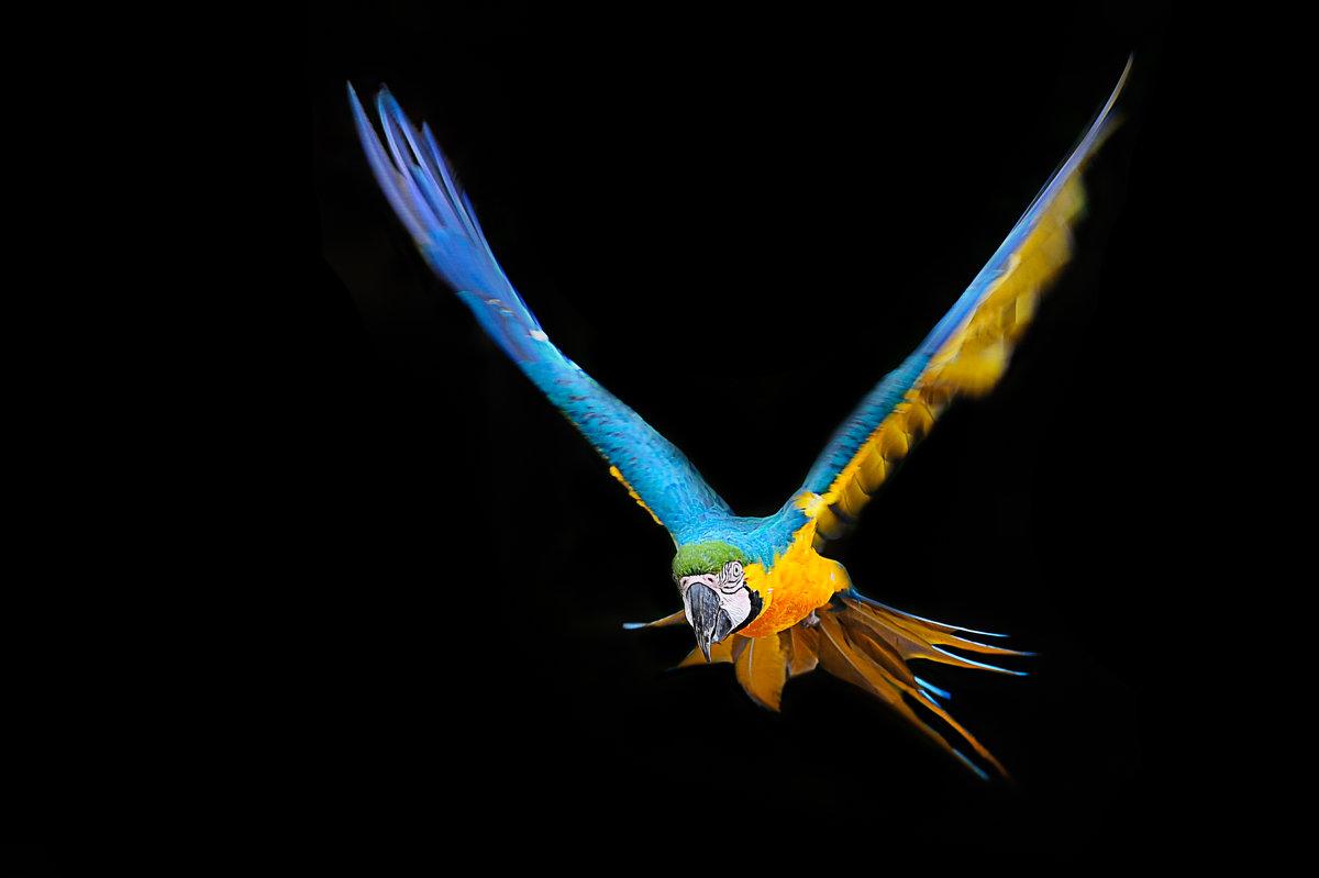 Попугай Ара - Валерий