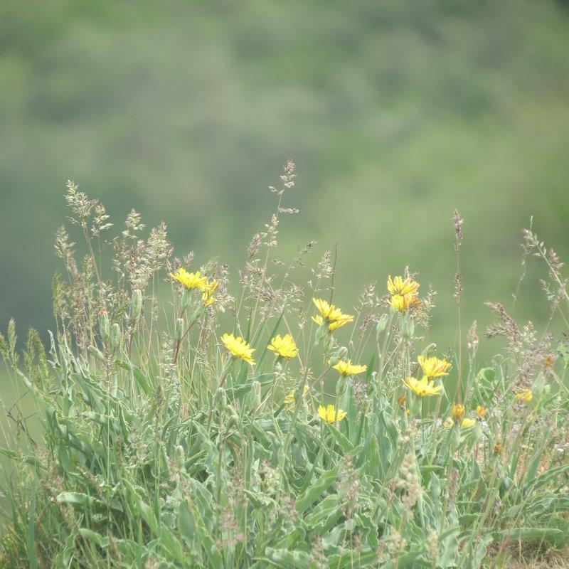Полевые цветы - Людмила