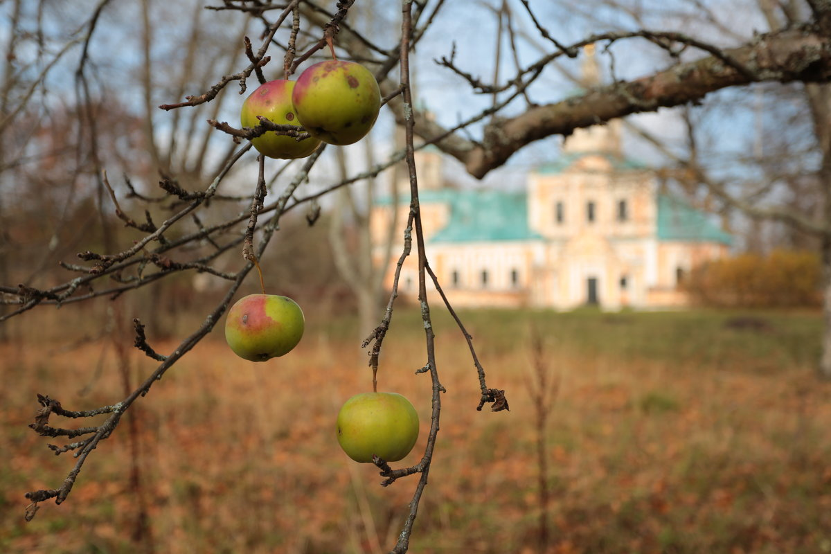 Яблочки - Ninell Nikitina