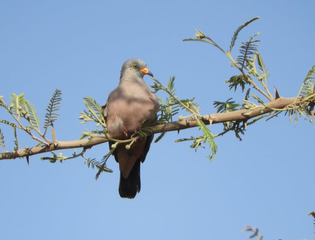 Croaking Ground -Dove - чудинова ольга