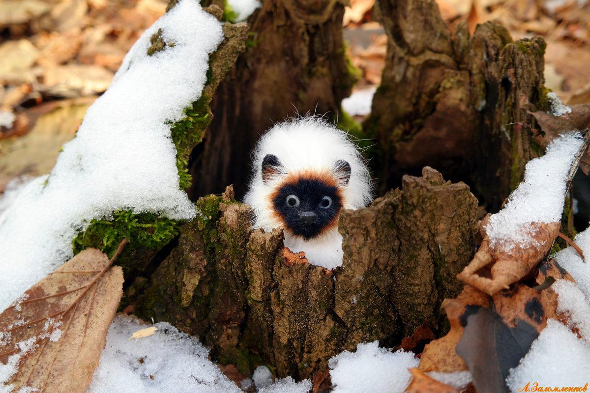 Пора лесным зверушкам на зимовку..:) - Андрей Заломленков