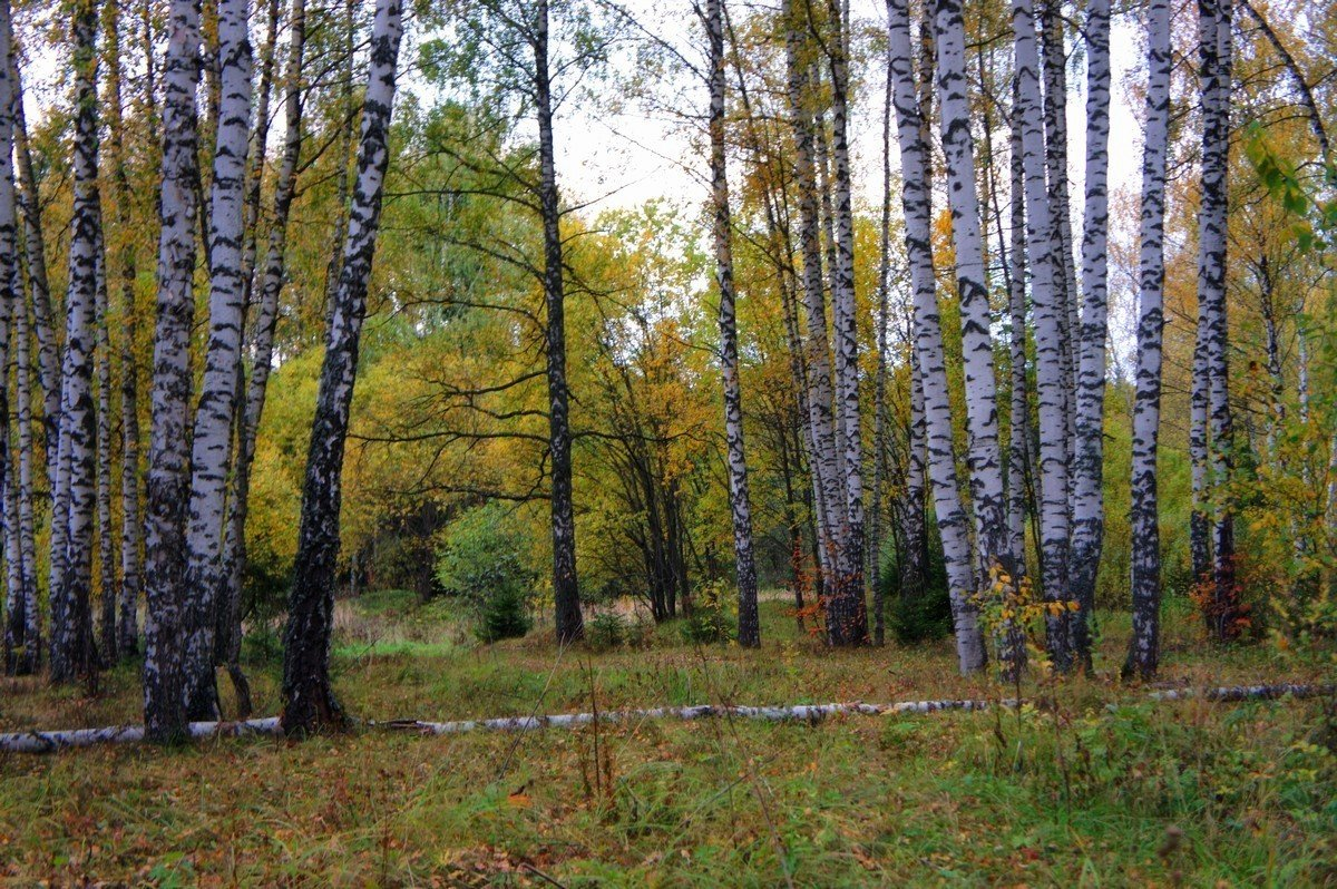 Лес в октябре... - марк