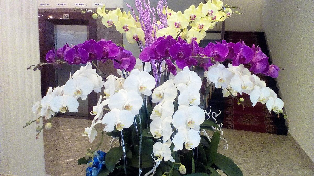 Цветы сайгона - maikl falkon
