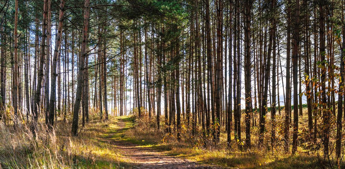 Панорама осеней лесной тропинки - Анатолий Клепешнёв