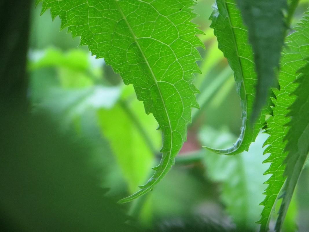 Зеленое прекрасное - Данил Вишневский