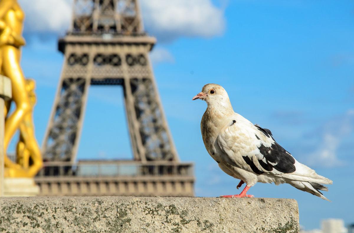 Парижанин - Наталия