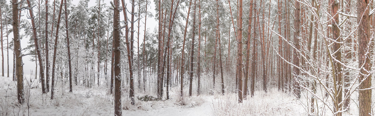 Зимний лес - Анатолий Клепешнёв