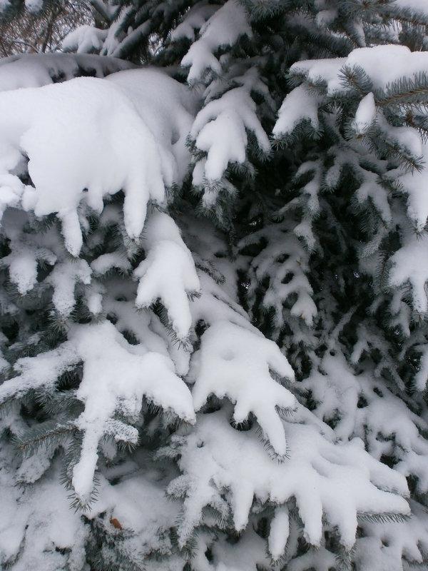 Зимой ... - Алёна Савина