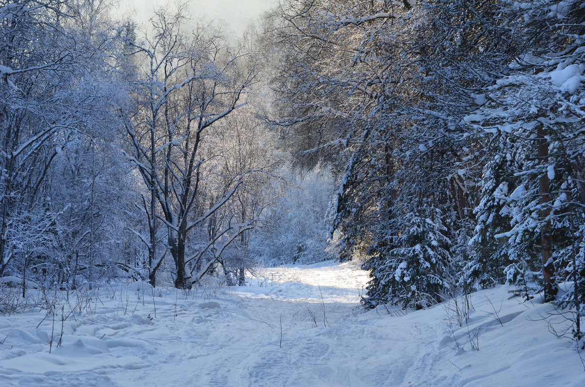 Зимняя сказка - Татьяна Соловьева