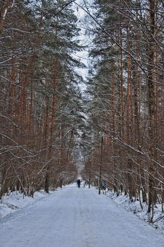 В лесу - marmorozov Морозова