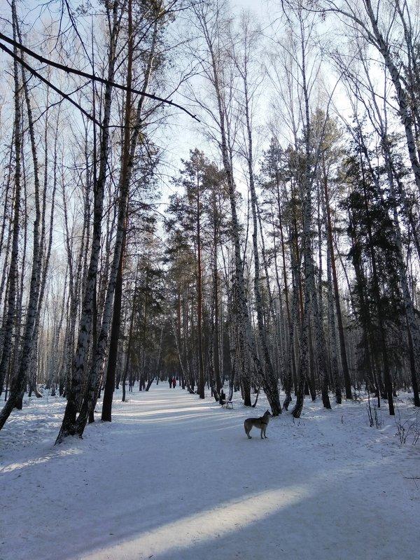 Зимний парк - Татьяна Котельникова