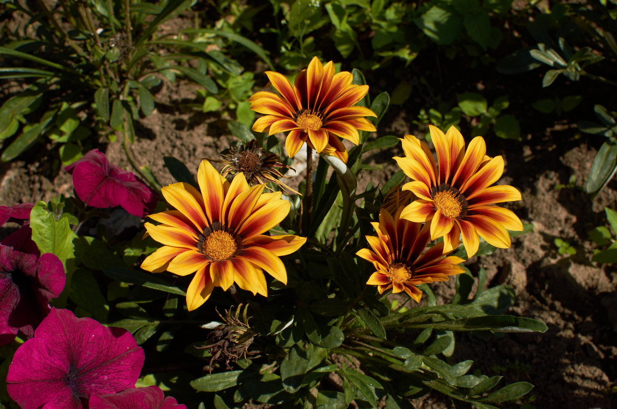 цветы - Натали Зимина