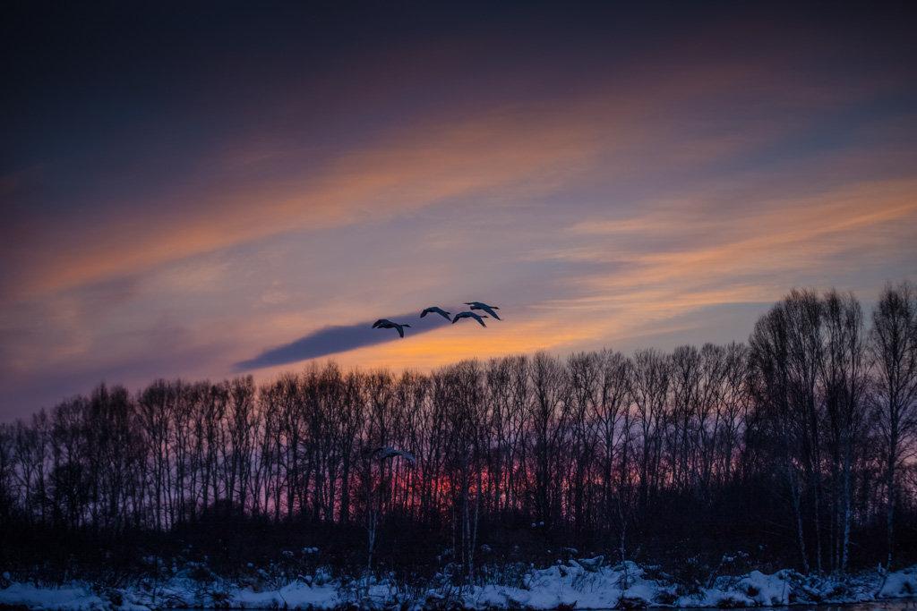 на закате  Лебединое озеро - Елена Маковоз