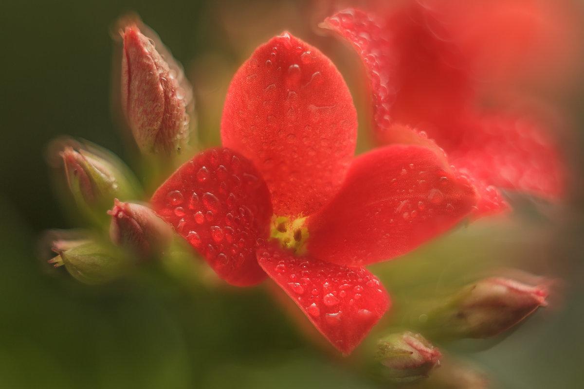Красный цветок. - Николай Андреев