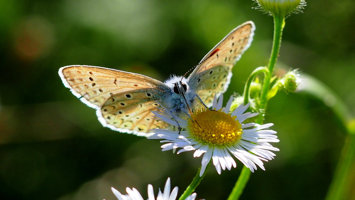 и снова про летающие цветы 5 - Александр Прокудин