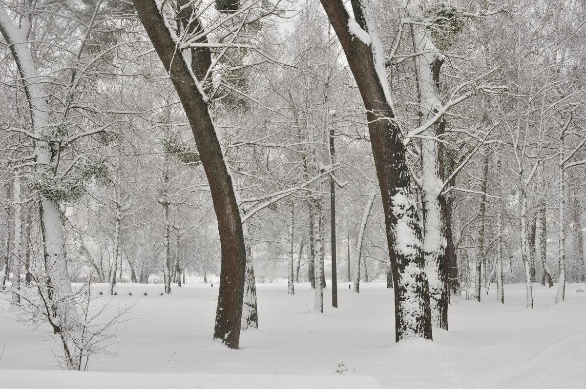 Снежно ... - Ольга Винницкая (Olenka)
