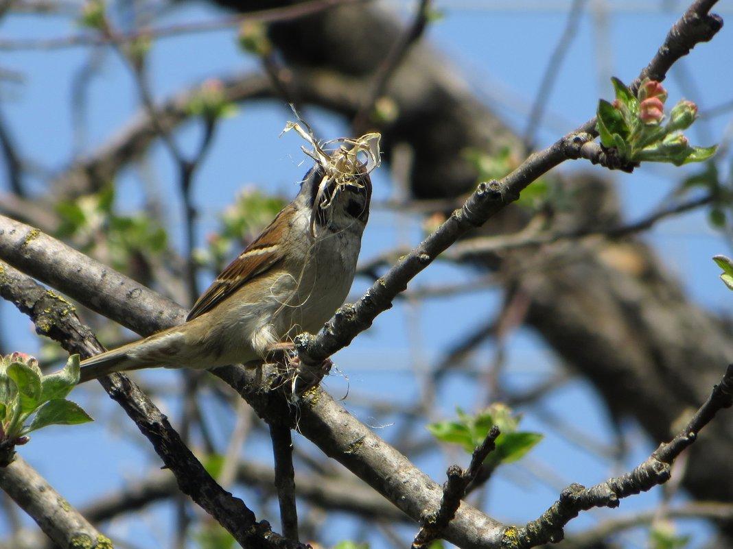Заботливая птаха - Татьяна Смоляниченко