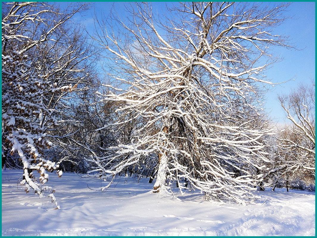 Красота зимнего дня... - Николай Дони