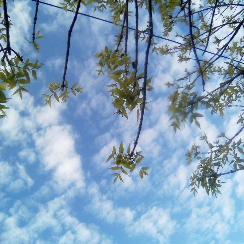 Весеннее небо - Лада Замараева