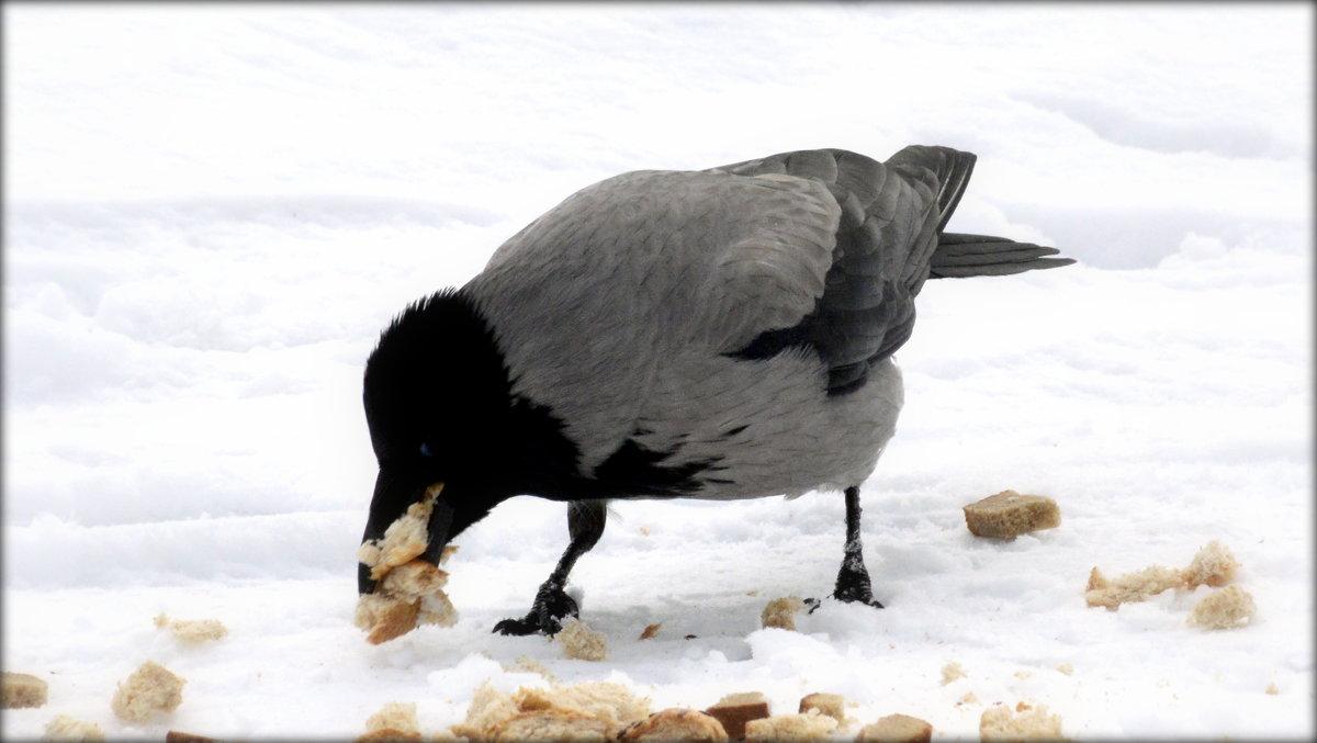 Жадная ворона - Сергей