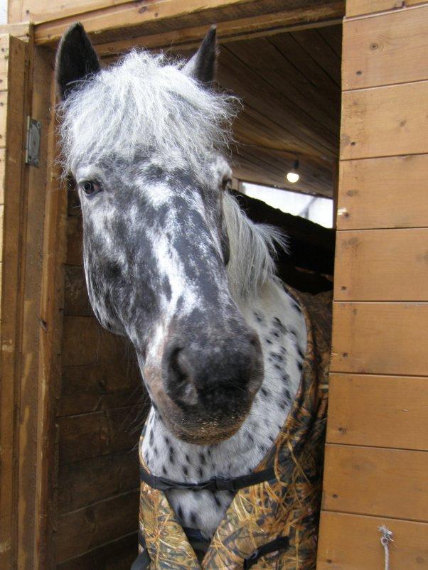 На конном дворе - Анна Воробьева