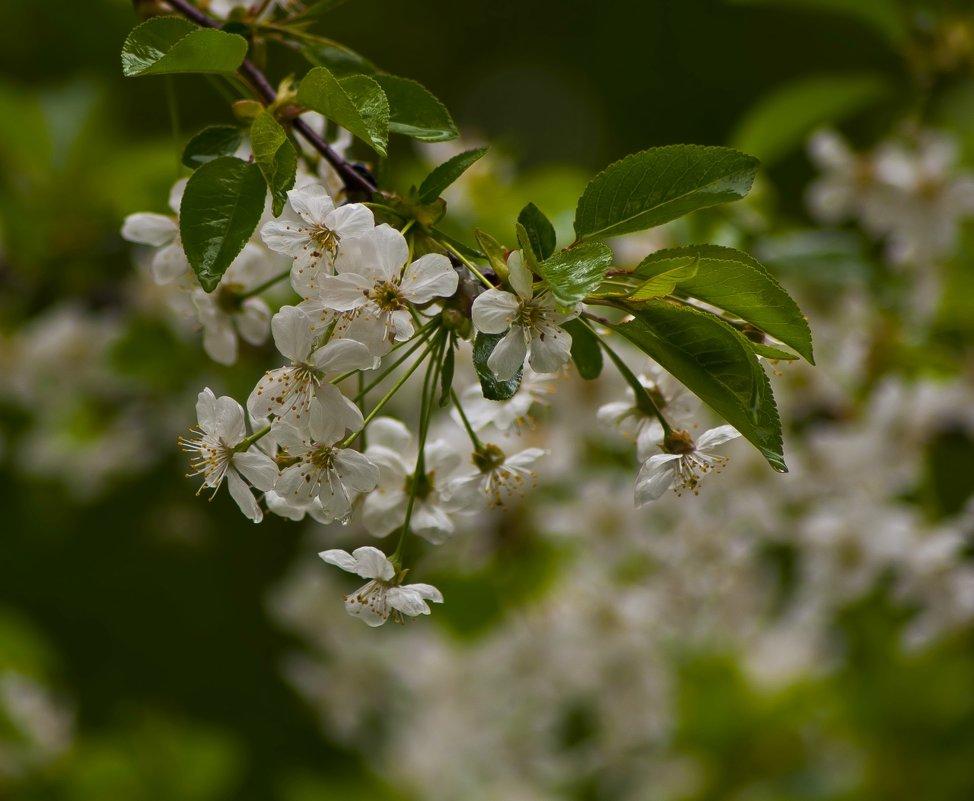 Маленький фрагмент весны - Ольга Винницкая (Olenka)