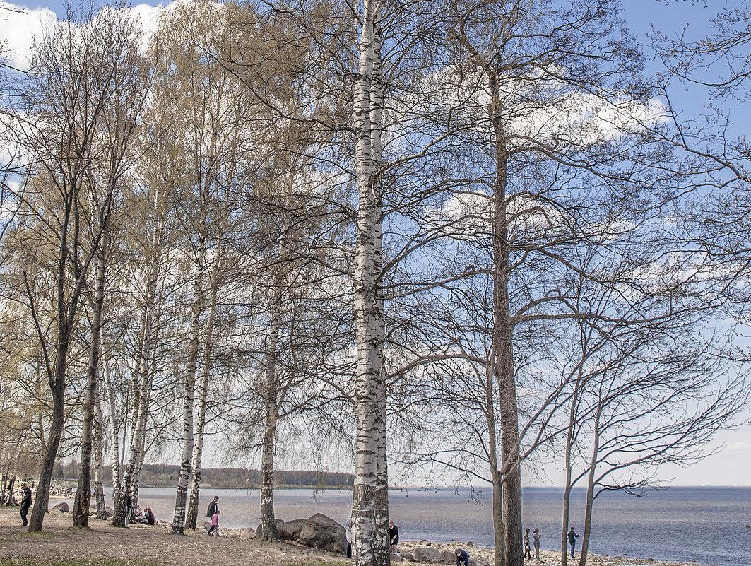 Весенняя прогулка в Петергофе - bajguz igor