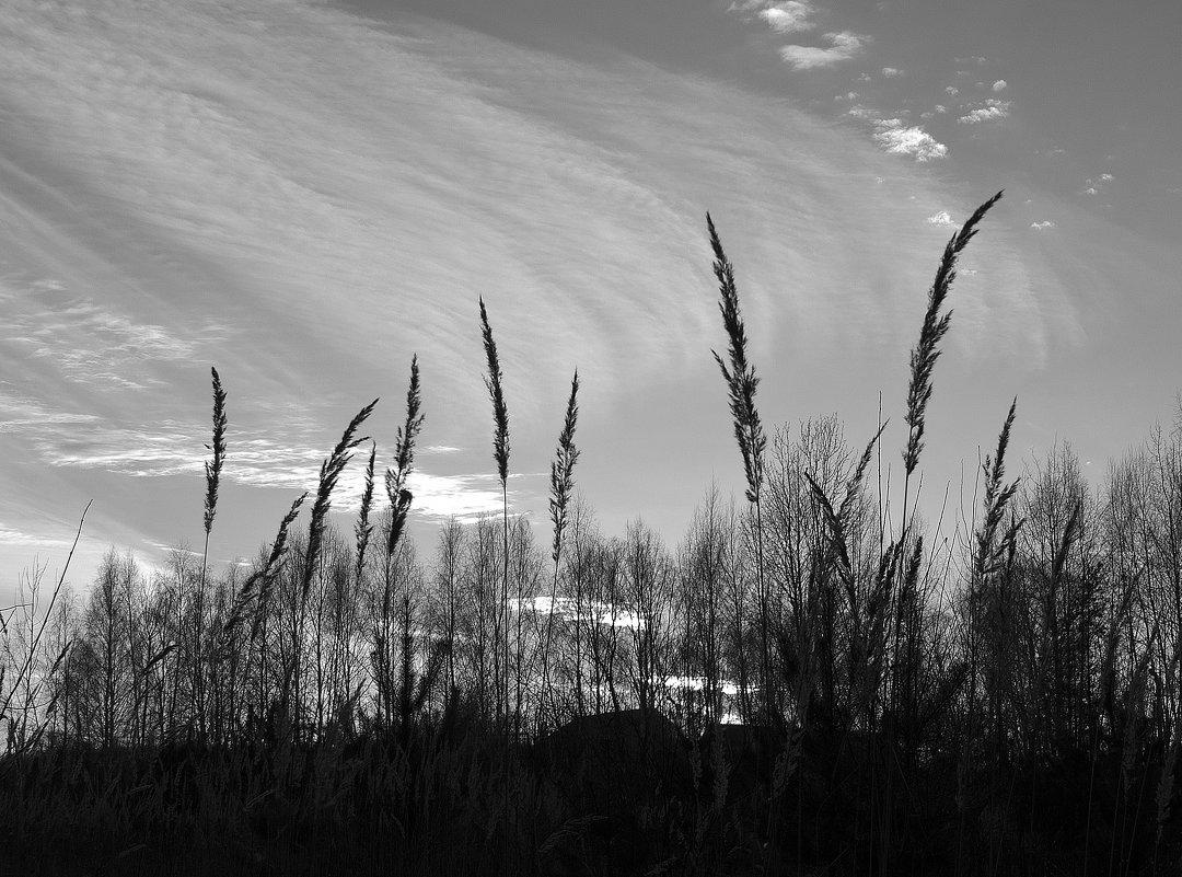 небо в черно-белом - Рашид