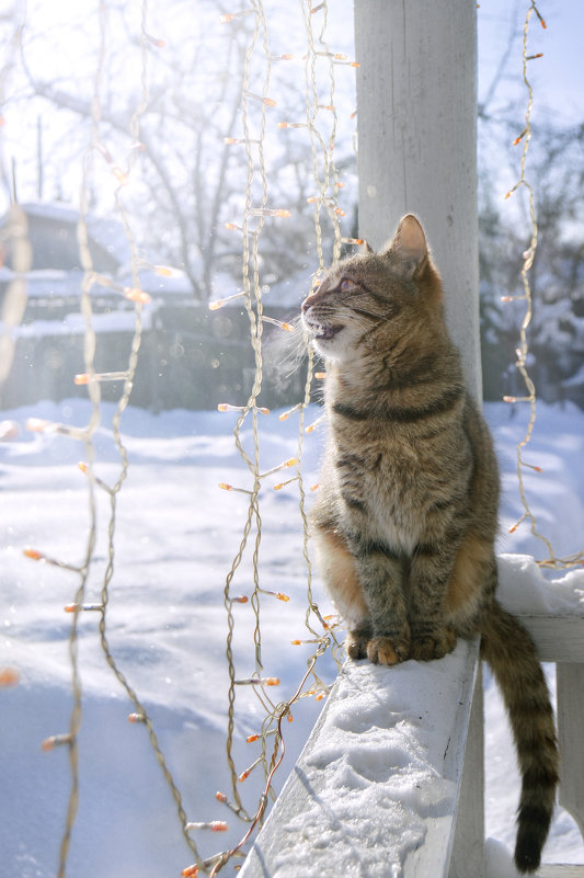 Весенние песни в морозное утро - Ирина Полунина