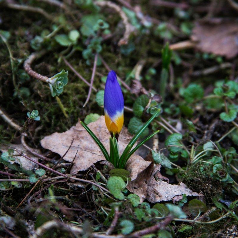 Первоцветы встречают весну - Nika Polskaya