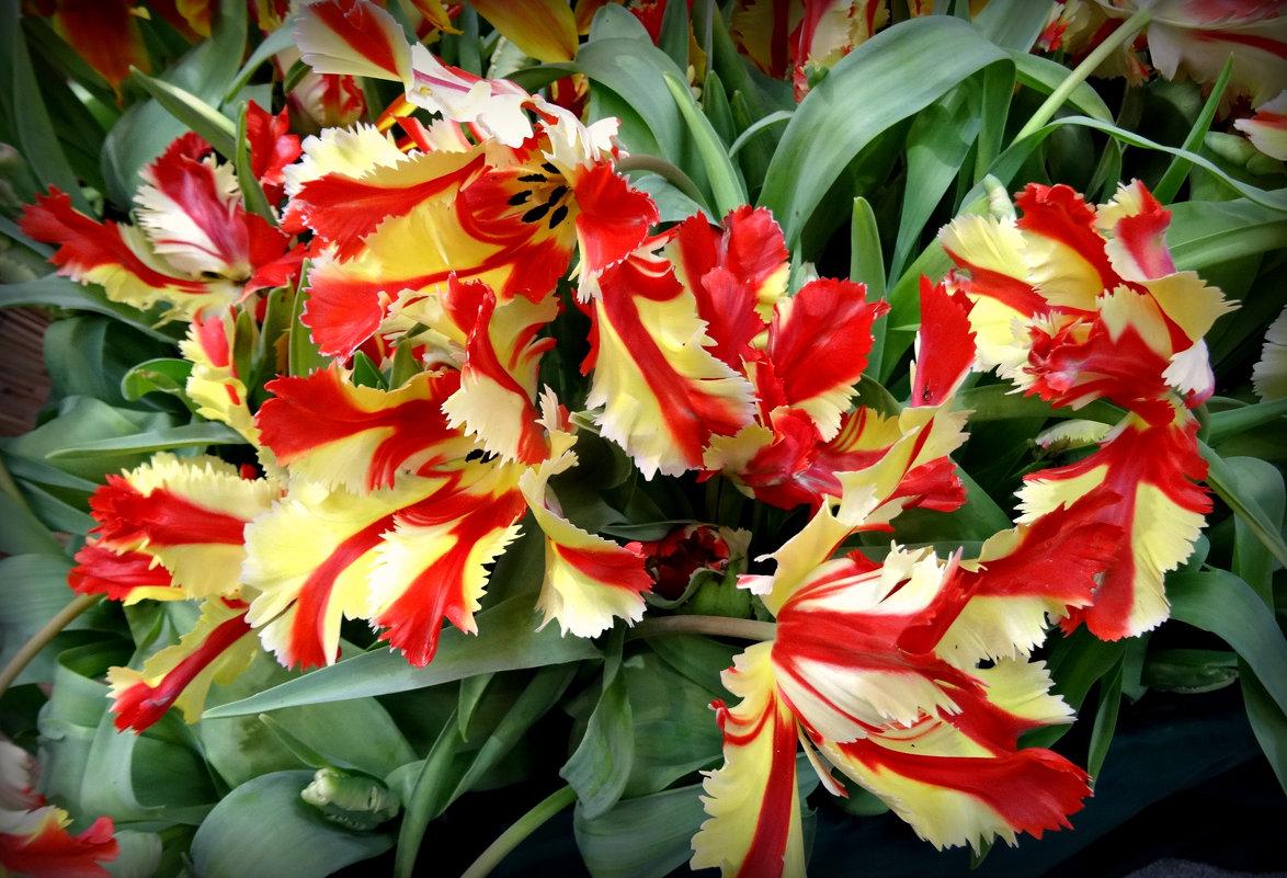 Тюльпаны - Наталия Короткова